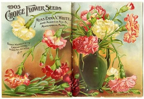 "This image contains the full view of both the front and back cover of Emma V. White's 1905 catalog.  A shiny green vase holds casual arching carnations.  Less noticeably, there is an address change listed, as she moved from 818 Nicollet Avenue to 3010 Aldrich Avenue South, still in Minneapolis. Emma V. White called herself the ""North Star Seedswoman"" and had her first mailing in 1896. She produced catalogs with colorful, hand painted covers aimed at woman customers."