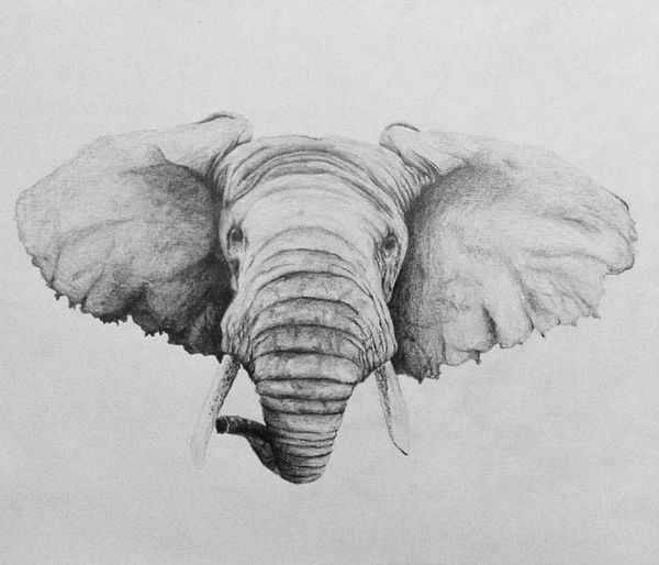 #art #draw #draws #drawing #paint #painting #paintings #elephant ✌️