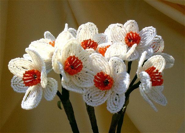 Pattern - Tazetta daffodil