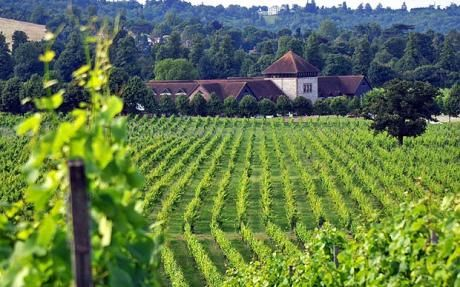 Where better than a vineyard! Denbies is England's largest vineyard, has award winning wines and can host weddings. We are there!