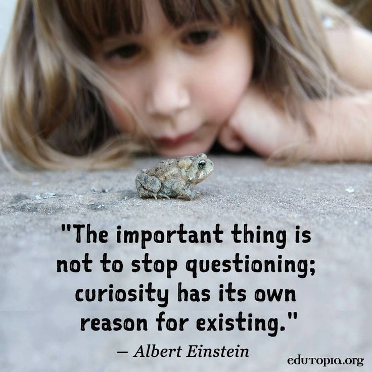 curiosity  sc 1 st  Pinterest & 54 best Quotes images on Pinterest | Thoughts Words and Truths 25forcollege.com