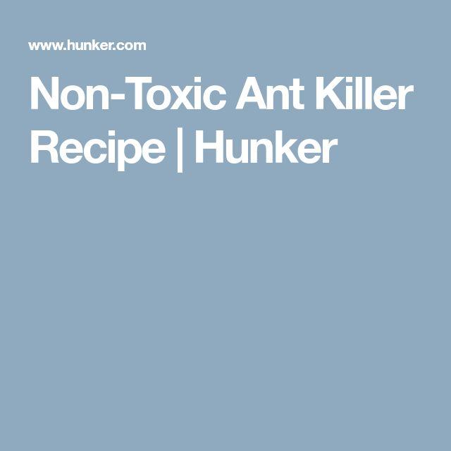 Non-Toxic Ant Killer Recipe | Hunker