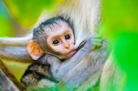 BABY MONKEY Photo by Enrique del Campo — National Geographic Your Shot