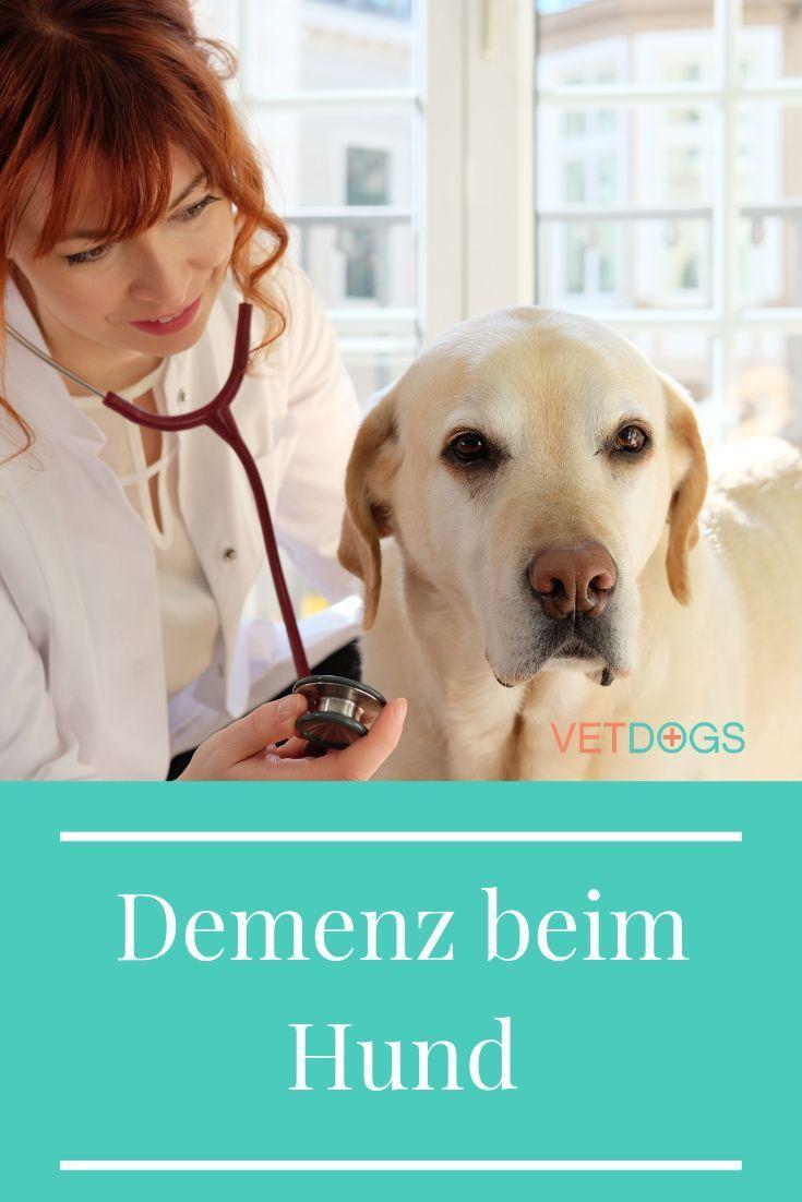 Demenz Beim Hund Das Kannst Du Als Besitzer Tun Hunde Tierarzt Hundetraining