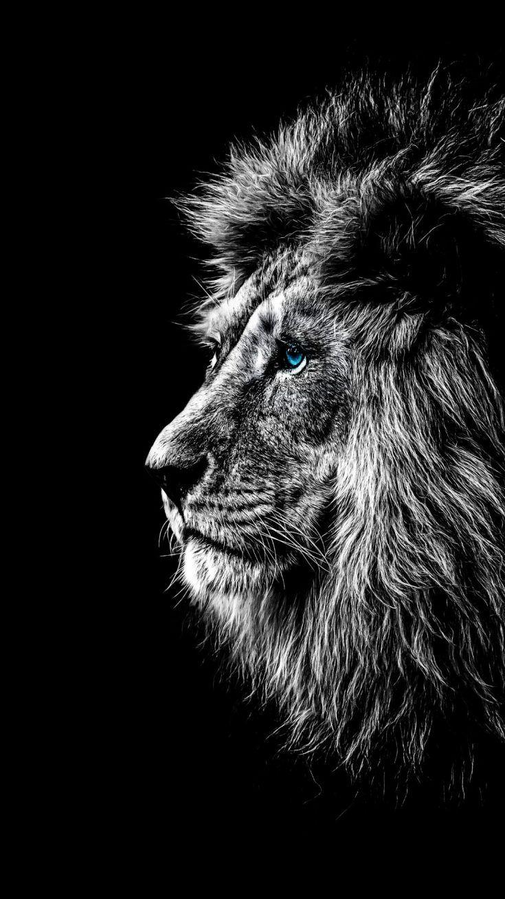 64 Adorable Iphone Animal Wallpaper Hd Lion Wallpaper Iphone Lion Wallpaper Lion Hd Wallpaper Aesthetic black iphone lion wallpaper hd