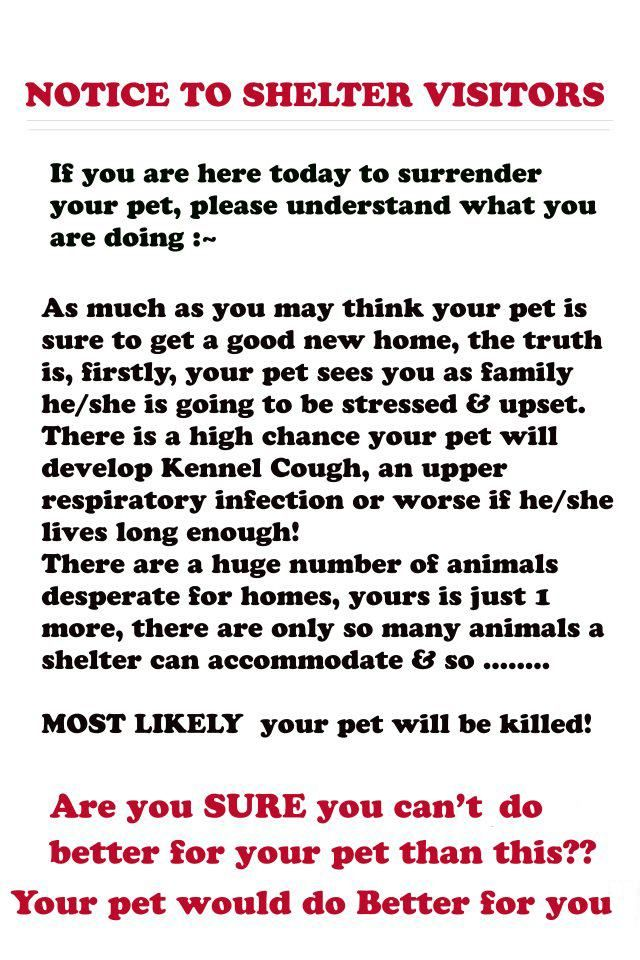 Pet sounds utsatt for sabotage