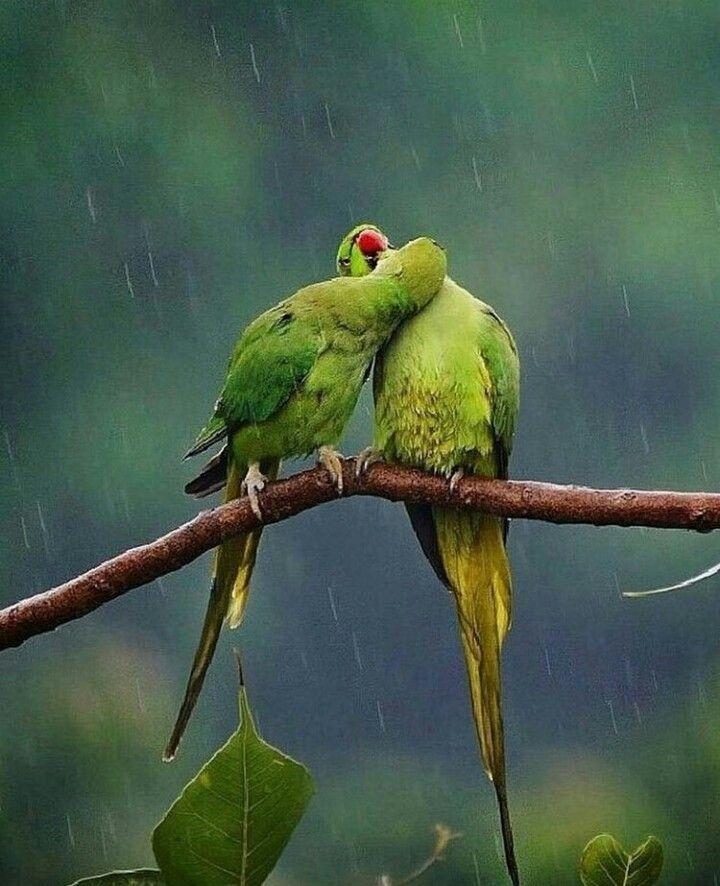 Cotorras Amor Animal Aves De Colores Cotorros Verdes Cotorro