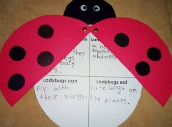 Ladybug Craft Report Guide  Template - ONLY $1!