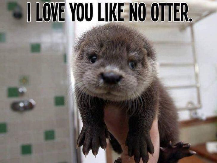 Otter pun mini meme dump. Enjoy - Album on Imgur