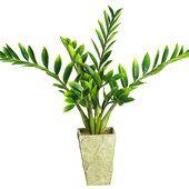 Τα τέσσερα ανθεκτικότερα φυτά εσωτερικού χώρου
