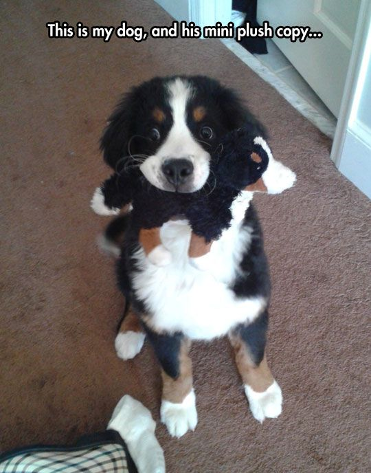 Dr. Evil's dog and mini dog...