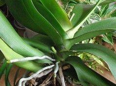 ZNÁMÝ ZÁHRADKÁŘ NÁM ŘEKL, JAK PEČOVAT O orchideje. Tyto triky jsou zcela ZDARMA