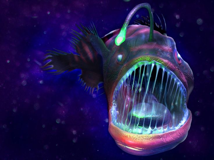The deep sea dwelling angler fish tattoo pinterest for Angler fish pet