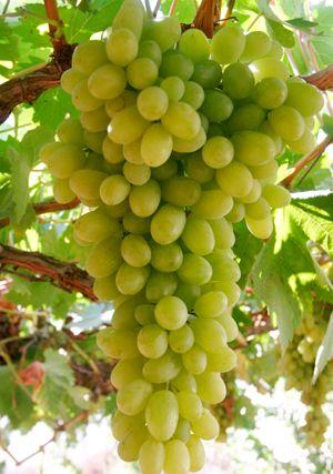 Yo como uvas verdes en el desayuno todos los dias.