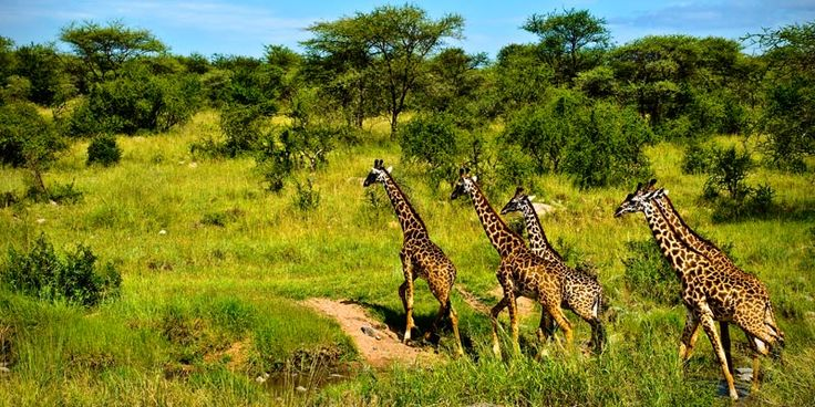 Tanzania, Australia