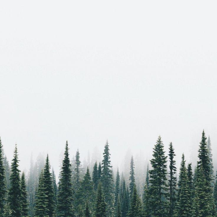 Treetops /