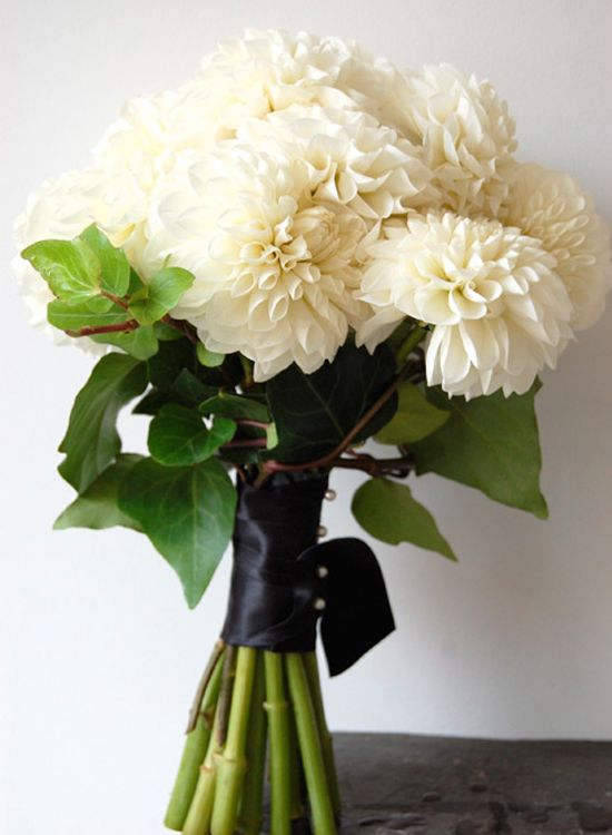 This stunning bouquet of dahlias looks beautiful wrapped with satin ribbon. Dahlias are also a popular choice to substitute for peonies because of their unique look and charm. Shop dahlias and other beautiful wedding flowers year-round at GrowersBox.com!Beautiful Flower, Burlap Flower, Flower Bouquets, Flower Arrangements, White Dahlias Bouquets, Black Ribbons, Flower Beautiful, Bridesmaid Bouquets, Pretty Flower