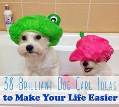 Alerting ALL Dog Lovers! 38 dog-care ideas to make your life easier and your dog happier.