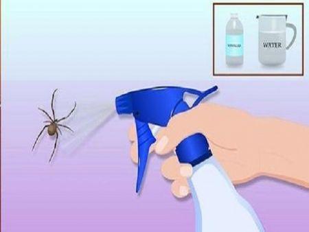 Receita 5 dicas naturais para eliminar insetos em casa - aranhas, formigas, baratas e muito mais!