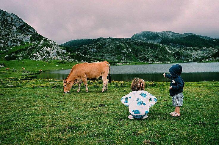 Una de las cosas que más me sorprendieron de los Lagos además de lo bonitos que son es lo tranquilas que son las vacas y como pasan de la gente. El peque es un loco de este animal desde muy canijo y disfrutó mucho de poder acercarse a ellas #tropoAstur #lake #covadonga #cow #kids #kidsforreal #kidstagram #childhood #instakids #photoNature #nature #naturephotography #naturephoto #mountain #clouds #cloudstagram #vsco #vscogood #vscogrid #vscohub #vscocam #photooftheday #vscolovers #vscofashion…