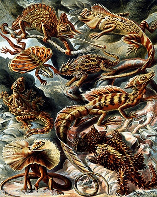 A logjam of lizards