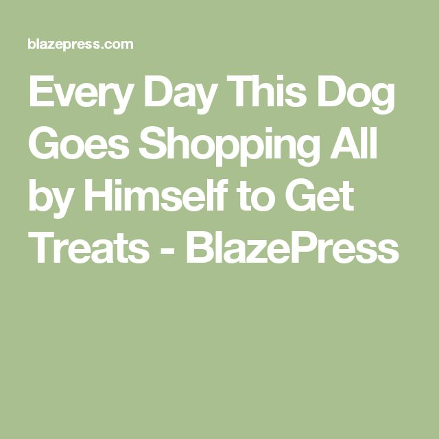 Every Day This Dog Goes Shopping All By Himself To Get Treats - Every day this dog goes shopping all by himself to get treats