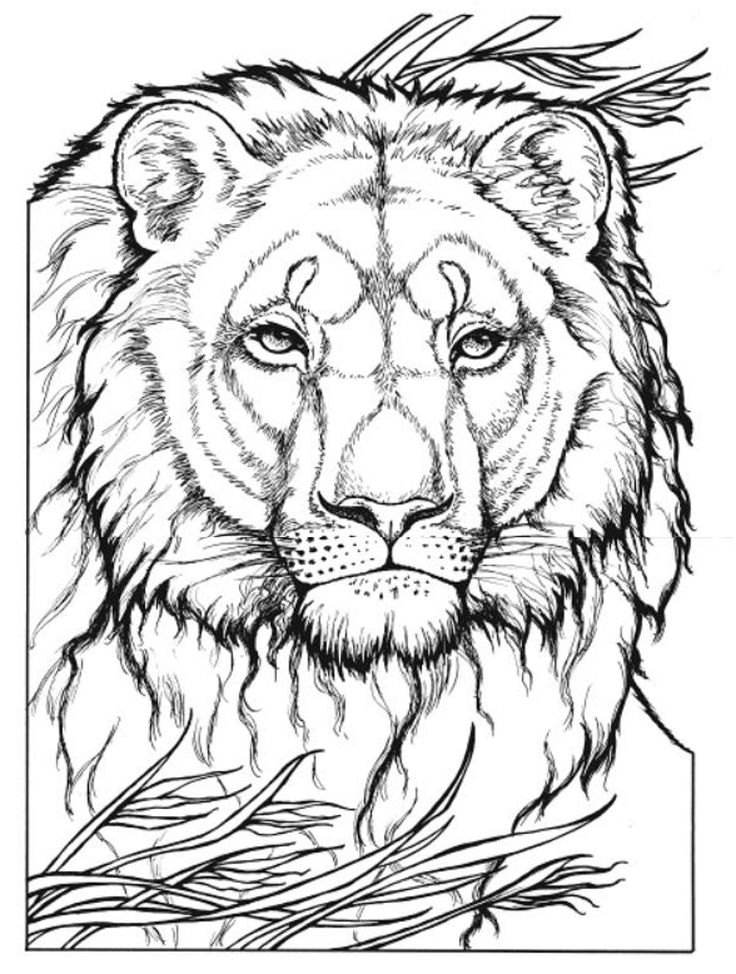 20 best images about big cat coloring pages on pinterest Crazy animals coloring book