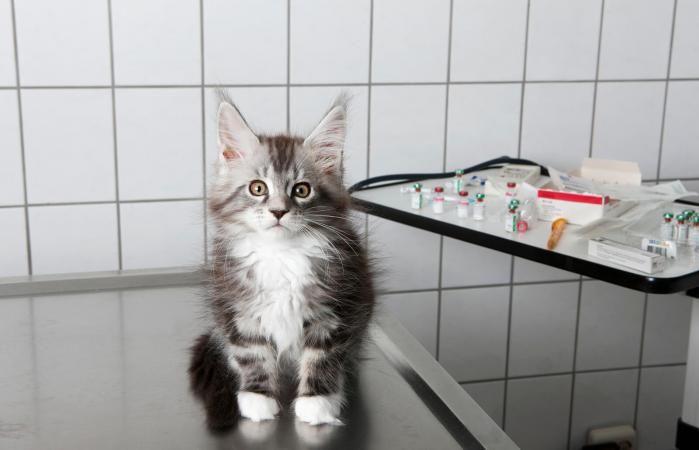 Afbeeldingsresultaat Voor Liquid Cat Cat Diseases Cats Cat Health