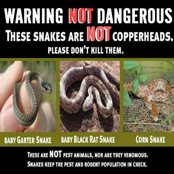 1000+ Images About NON-Venomous Snakes On Pinterest