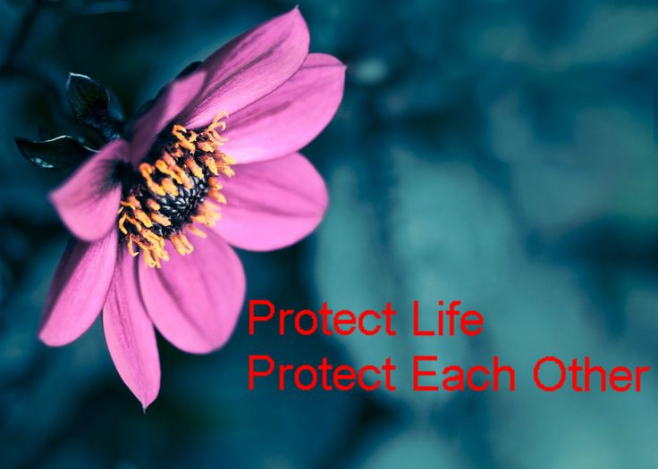 Protect Life Protect Each Other