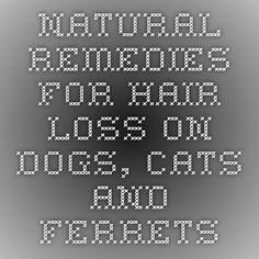 Natural Remedies for Hair Loss on Dogs, Cats and Ferrets