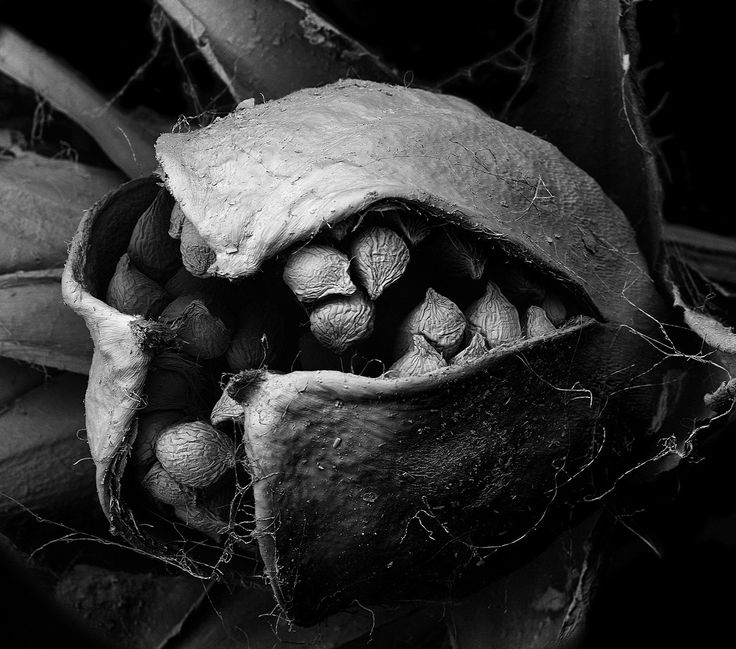 Matsuura Tomoya, Withered plant, Unknown larghezza dell'immagine 2,5 mm