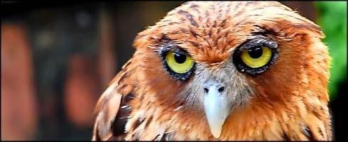 Lo sabe todo. Incluso que es un águila de Filipinas en peligro de extinción.