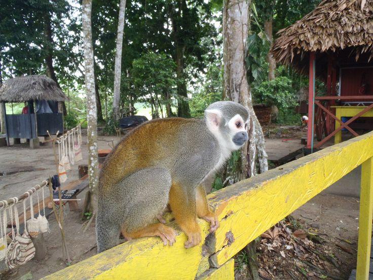 Isla micos Leticia