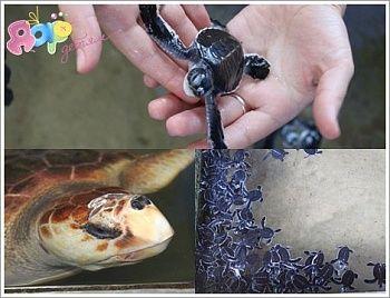 Черепаха – это удивительное и дружелюбное существо, некоторые виды которого стали населять нашу планету еще задолго до динозавров...
