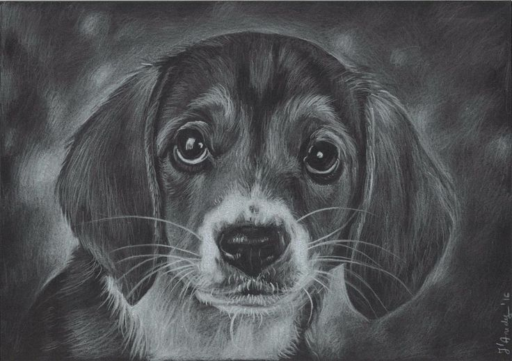 Custom original dog/cat A4 drawing portrait from your photo on black paper…