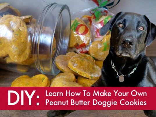 Making Dog Treats From Wet Food