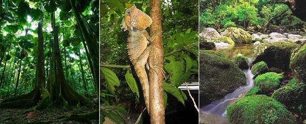 mossman gorge. #rainforest