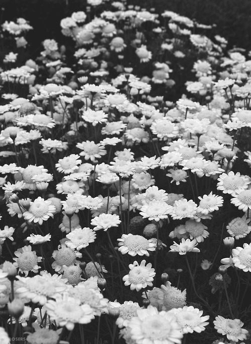 Pictures Of Flowers Tumblr Photography Black And White Kidskunstfo