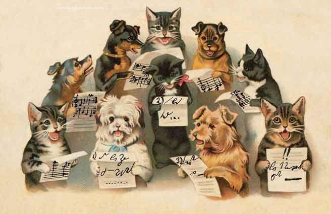 Открытки, открытка с днем рождения с собачками и кошками