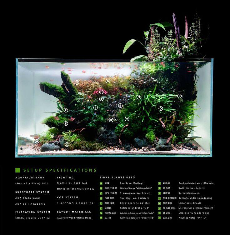 Aqua Design By Harry Photo By Man Tai Martin Aquarium Tank 90 X 45 X 45cm 183l Substrate System Ada Plata Sand Ada Soil Amazonia Filtration System E Paludarium