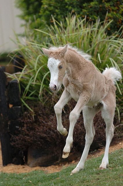 I love it when little foals do this!