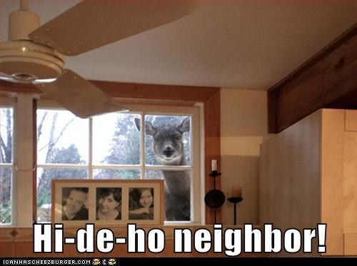 nosy neighborHilarious Memes, Funny Animal Pictures, Funny Pictures, Deer Head, Funny Stuff, House, Funny Memes, Deer Pictures, Animal Memes