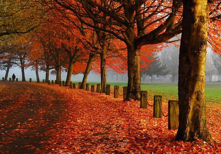 Trout Lake Park in Autumn - Vancouver, B.C.