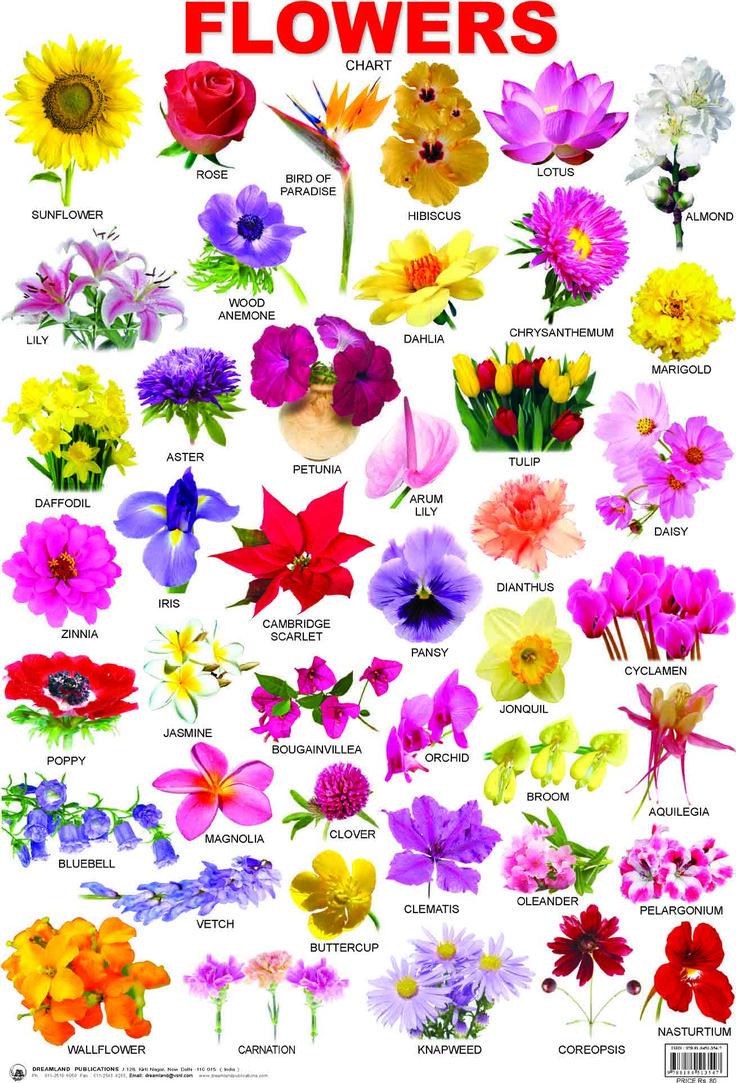 Marathi Flowers Name Chart Guna