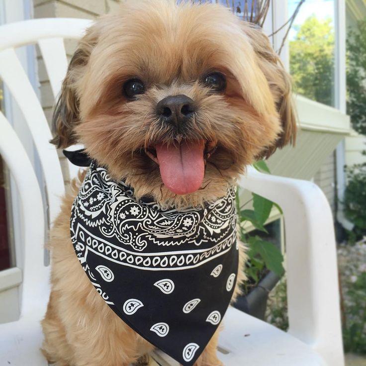 Summer makes me HAPPY  Follow me on the Insta @OscarPawpi for more of my fluffy cuteness #OscarPawpi