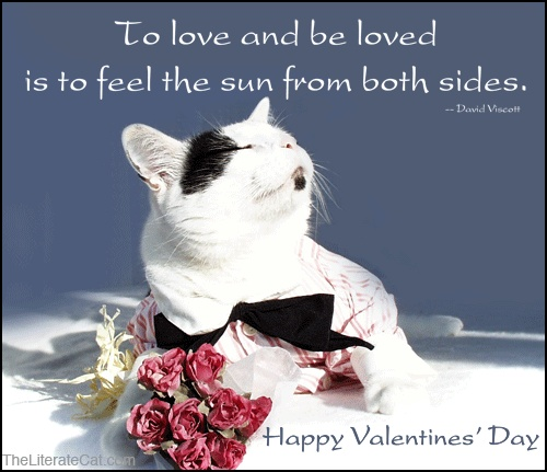 Inspirational Day Quotes: 30 Best Images About Valentines Day Cats On Pinterest