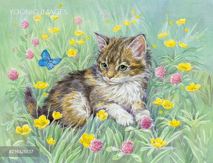 Yooniq images - Kitten with Butterfly, buttercups and clover