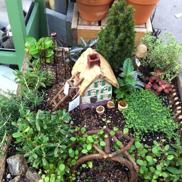 Good Images Of Fairy Gardens #1: 8b492412b0812dd6338504b27b4a8014--fairies-garden-fairy-gardens.jpg