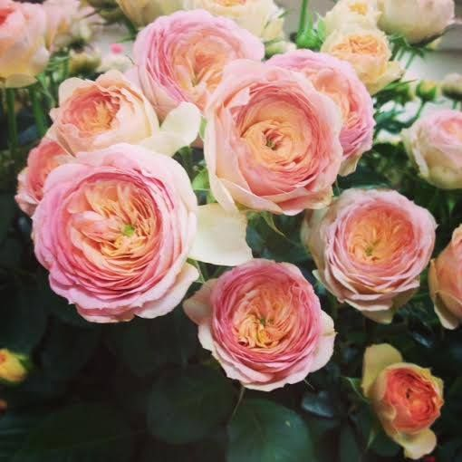 1000 Images About Light Pink Flowers On Pinterest Spray
